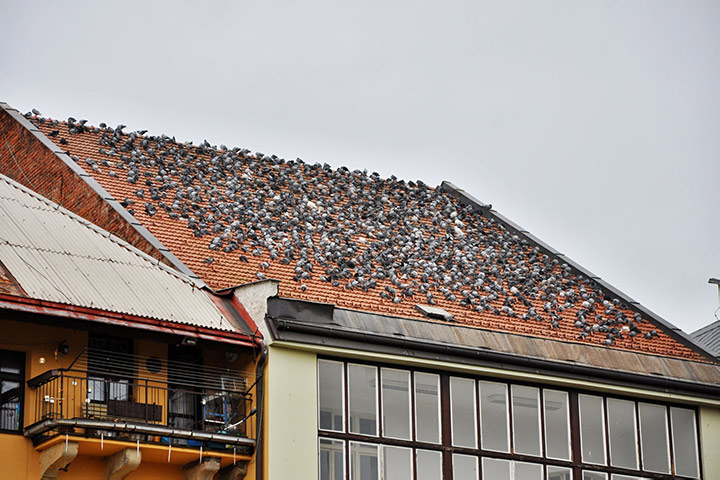 A2B Pest Control are able to install spikes to deter birds from roofs in Benfleet.