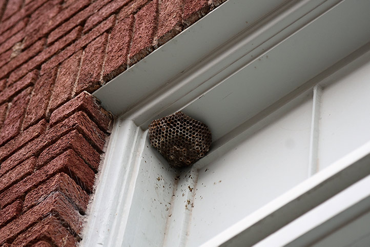 We provide a wasp nest removal service for domestic and commercial properties in Benfleet.